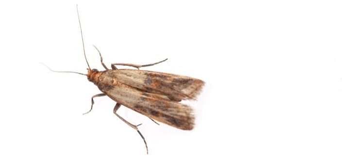 Mottenbekampfung Motten Aller Arten A B Kessner